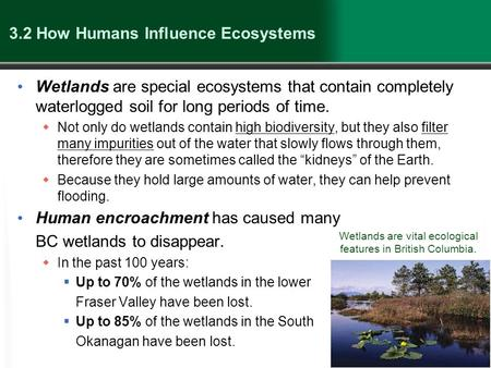 3.2 How Humans Influence Ecosystems Wetlands are special ecosystems that contain completely waterlogged soil for long periods of time.  Not only do wetlands.