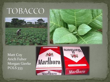 "Matt Coy Arich Fuher Morgan Gierke POLS 333. Agriculture Adjustment Act of 1938 ""Tobacco growers were issued marketing quotas for the tobacco they were."