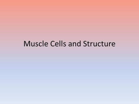 Muscle Cells and Structure. Skeletal Muscle Structure Properties of muscular tissue – Contractility- the ability to generate tension while shortening.