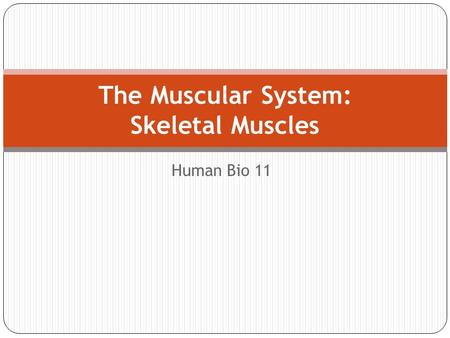 Human Bio 11 The Muscular System: Skeletal Muscles.