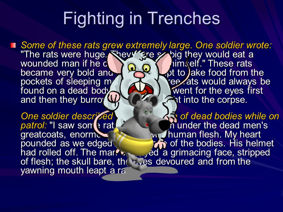 Fighting in Trenches Some of these rats grew extremely large.