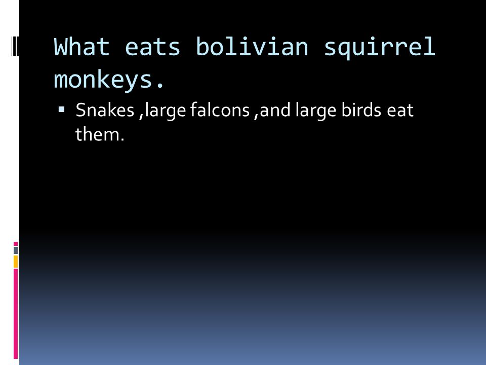 What eats bolivian squirrel monkeys.  Snakes,large falcons,and large birds eat them.