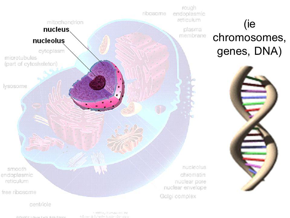 (ie chromosomes, genes, DNA)