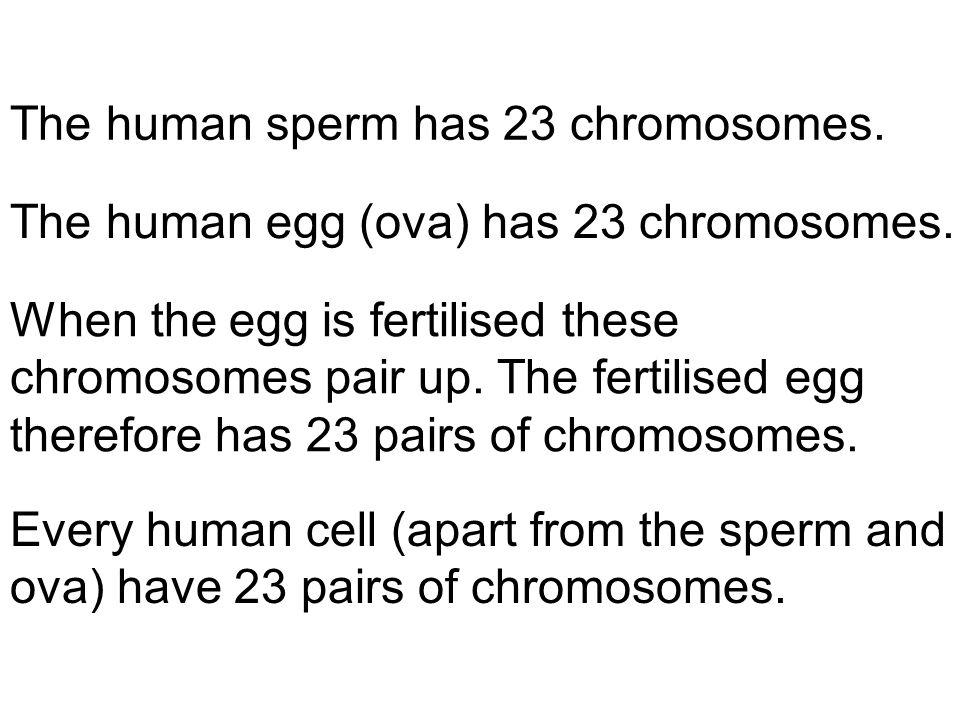 The human sperm has 23 chromosomes.The human egg (ova) has 23 chromosomes.