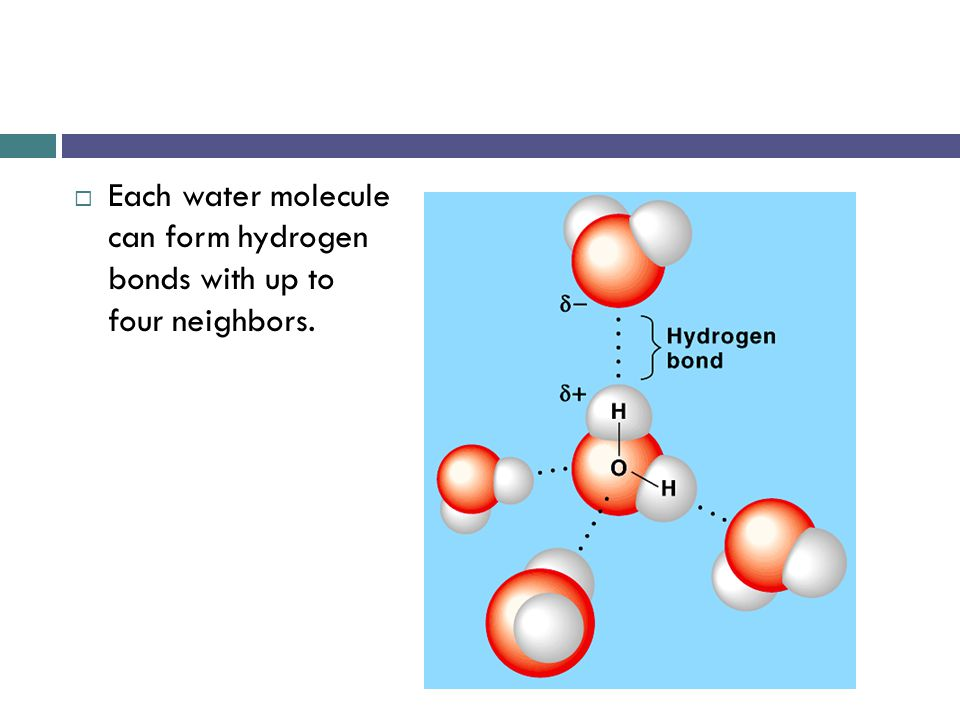 14 Hydrogen bonds affect the properties of waterr