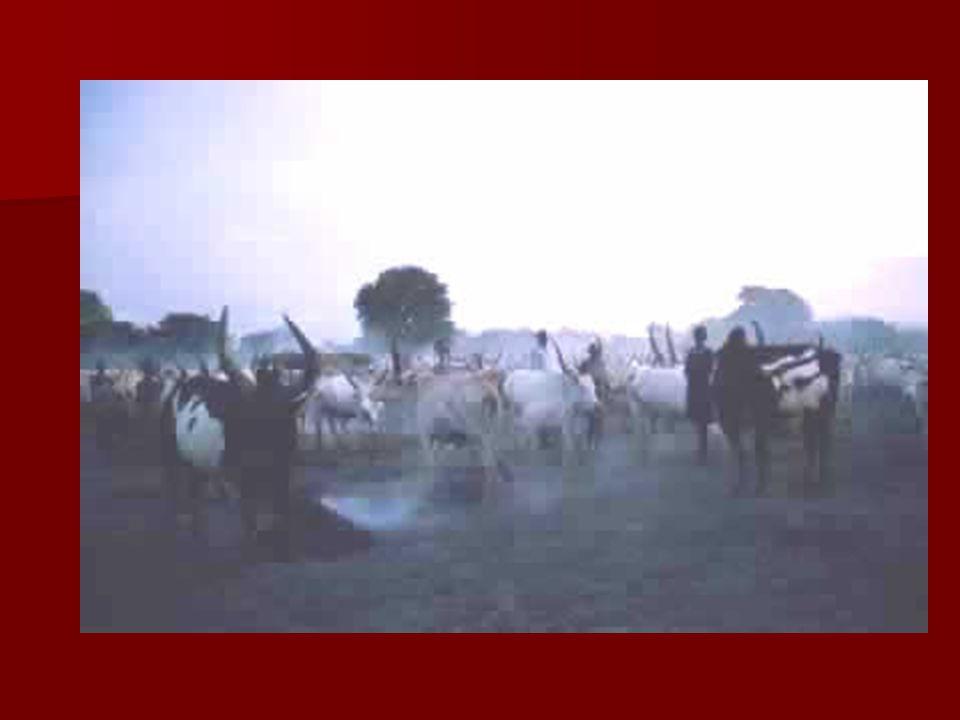 Maasai North central Tanzania, southern Kenya North central Tanzania, southern Kenya Population: 350,000 Population: 350,000 Language: Ol Maa (Nilotic) Language: Ol Maa (Nilotic) Neighboring Peoples: Samburu, Kikuyu, Kamba, Chaga, Meru, Pare, Kaguru, Gogo, Sukuma Neighboring Peoples: Samburu, Kikuyu, Kamba, Chaga, Meru, Pare, Kaguru, Gogo, Sukuma Types of Art: Maasai are best known for their beautiful beadwork which plays an essential element in the ornamentation of the body.