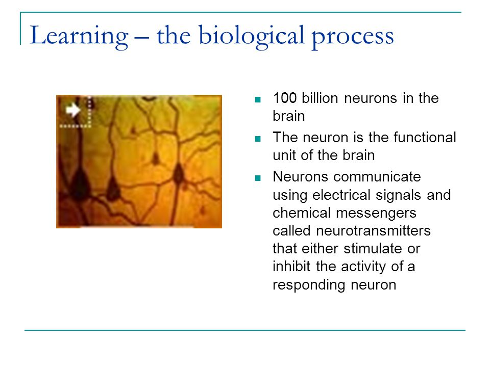 A neuron or nerve cell The neuron, or nerve cell, is the functional unit of the nervous system.