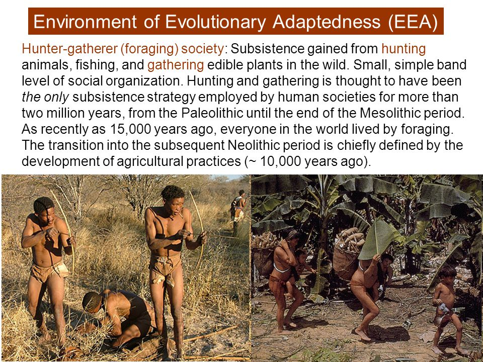 The environment that humans – and, therefore, human minds – evolved in was very different from our modern environment.
