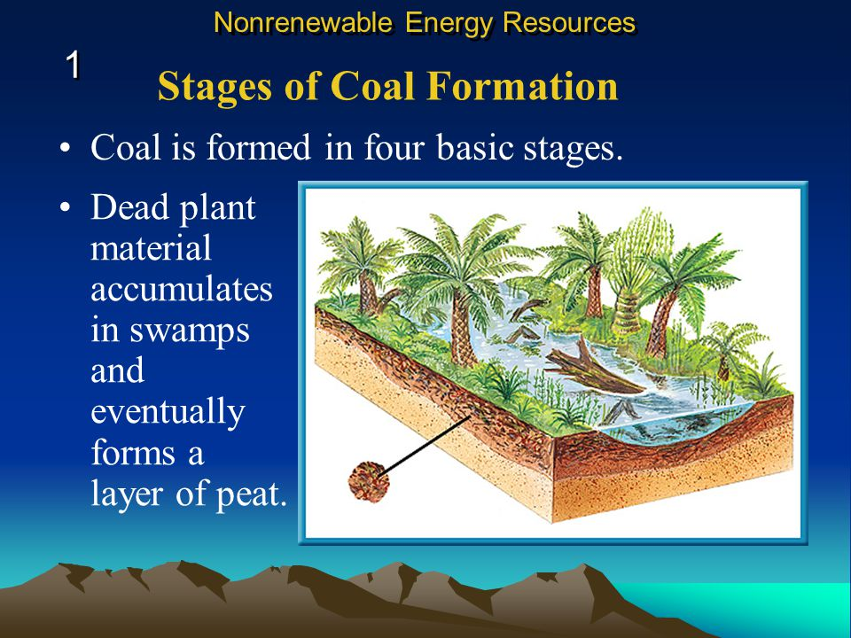 Dead plant material accumulates in swamps and eventually forms a layer of peat.