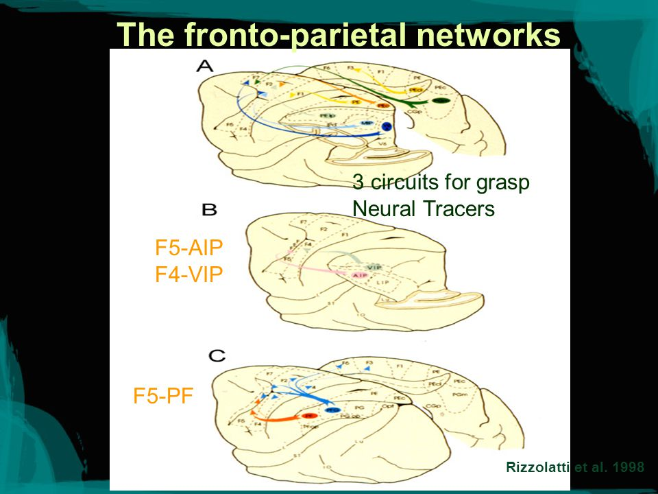 Area F5 General Purpose Neurons: General Grasping General Holding General Manipulating