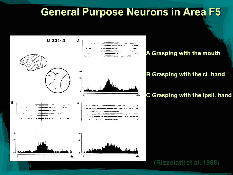 General Purpose Neurons Achieve Partial Universality: Their firing correlates with a goal-oriented action of a general type, regardless of effector or manner.