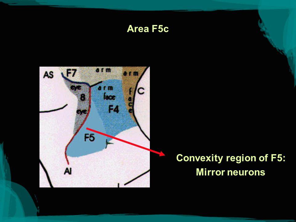 F5c-PF Rizzolatti et al. 1998