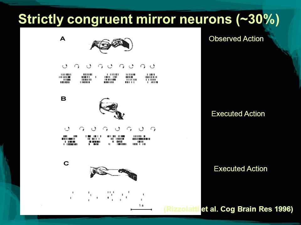 Category Loosening in Mirror Neurons (~60%) (Gallese et al.