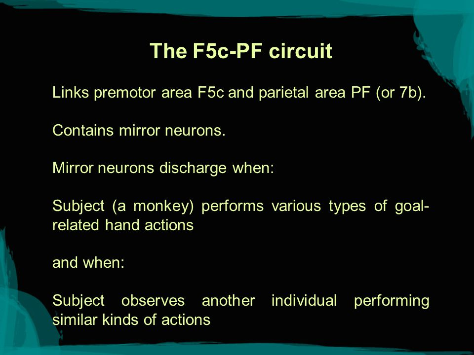 Phases Area F5 contains clusters of neurons that control distinct phases of grasping: opening fingers, closing fingers.