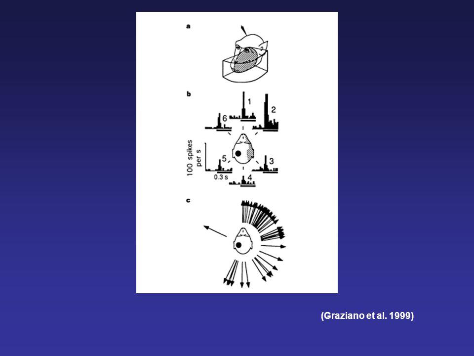 Somato-Centered Bimodal RFs in area VIP (Colby and Goldberg 1999)