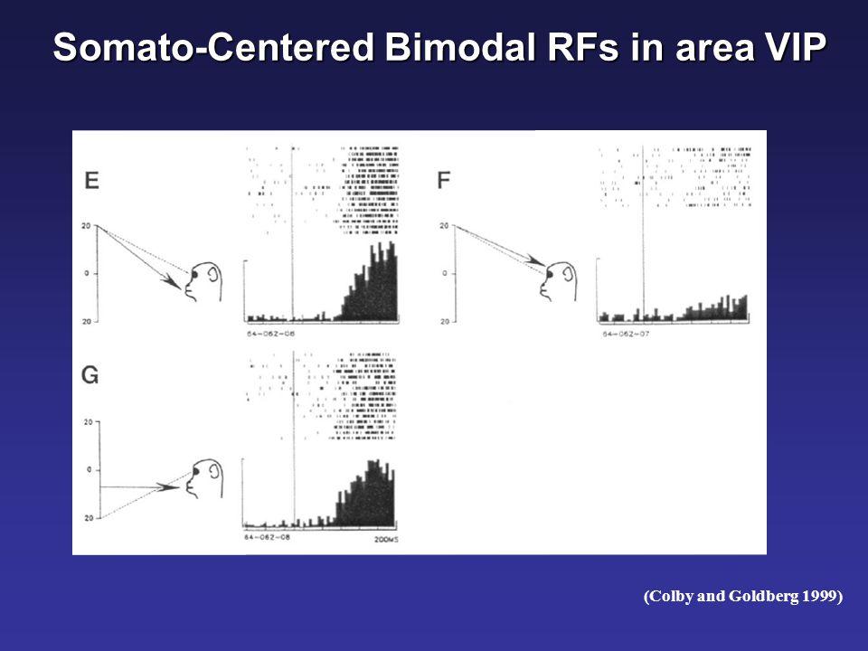 Somato-Centered Bimodal RFs in area F4 (Fogassi et al. J Neurophysiol 1996)