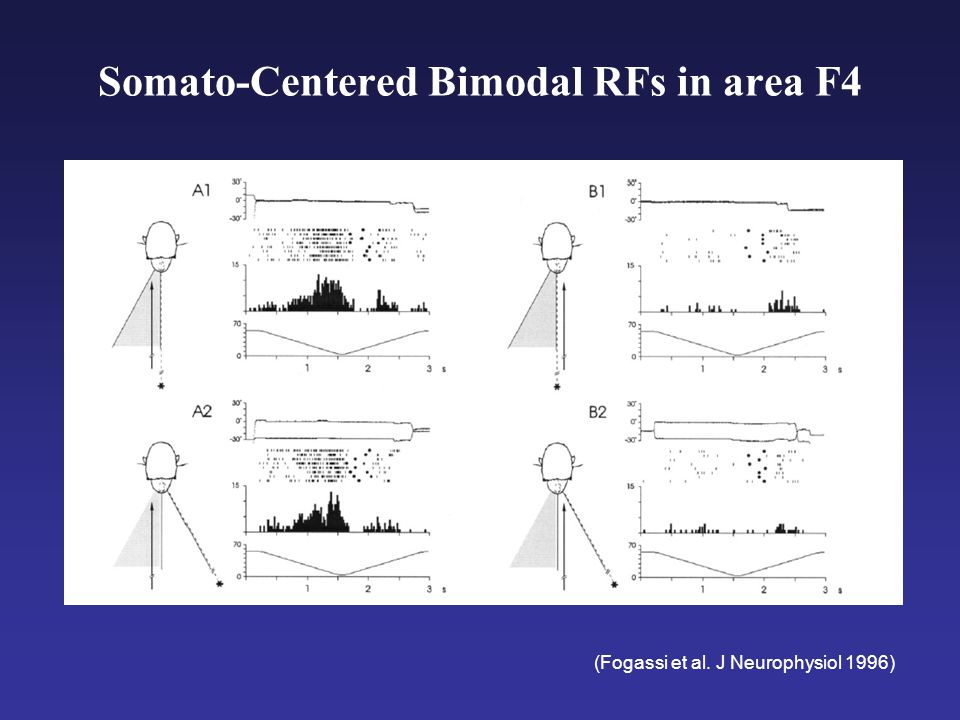 AIP and F5 (Grasping) in Monkey F5 - grasp commands in premotor cortex Giacomo Rizzolatti AIP - grasp affordances in parietal cortex Hideo Sakata