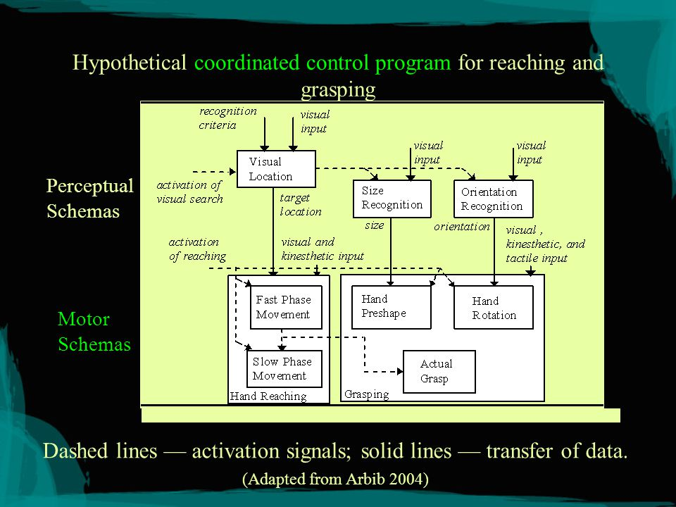 Modeling Motor Schemas Relevant requirements (Stromberg, Latash, Kandel, Arbib, Jeannerod, Rizzolatti) –Should model coordinated, distributed, parameterized control programs required for motor action and perception.
