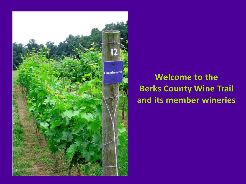  8 participating family-owned wineries in the Berks Region: Bashore & Stoudt County Winery Kog Hill Winery Blair Vineyards Long Trout Winery Calvaresi Winery Manatawny Creek Winery Clover Hill Vineyards & Winery Pinnacle Ridge Winery  trail organized in 2004  share unique philosophies to quality winemaking  encompass winemaking with locally grown grapes and fruits – from Chardonnay, Merlot, Vidal, Chambourcin to Peaches, Mulberry, Apples, Raspberries and more … a true celebration of local agriculture.