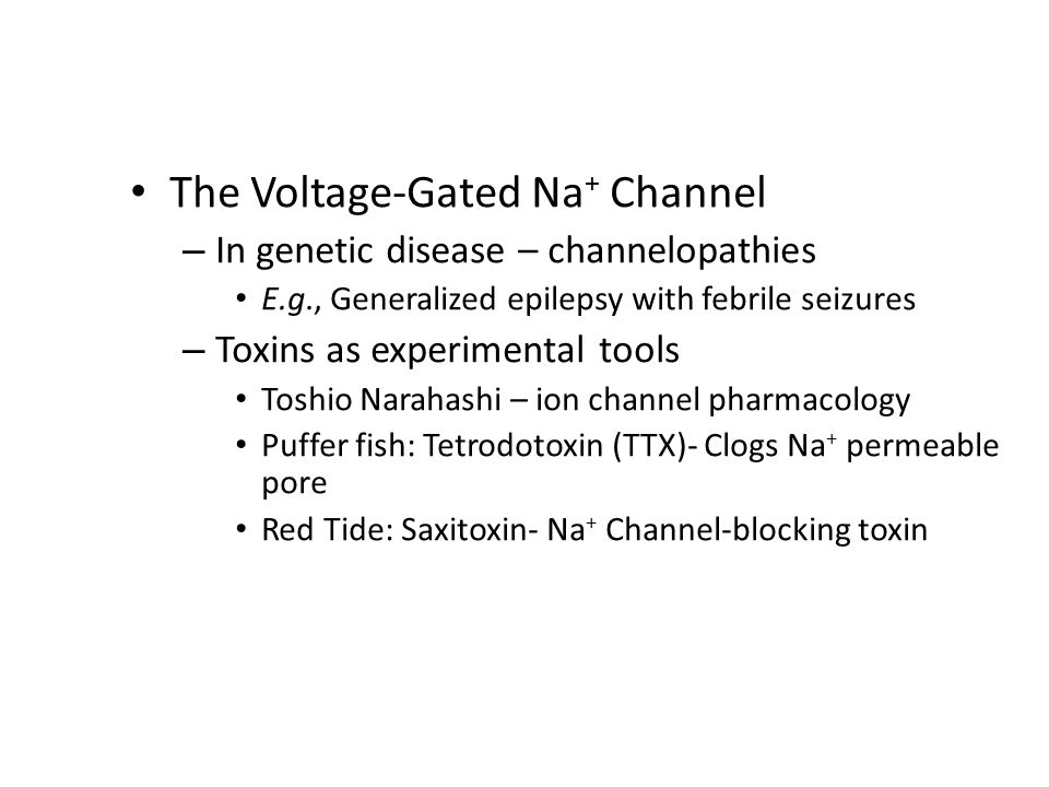 The Voltage-Gated Na + Channel (Cont'd) – Varieties of toxins Batrachotoxin (frog): Blocks inactivation so channels remain open Veratridine (lilies): Inactivates channels Aconitine (buttercups): Inactivates channels – Differential toxin binding sites: Clues about 3-D structure of channels