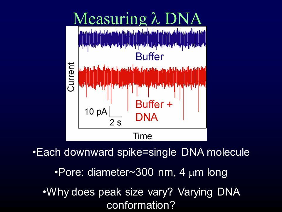selection principle: DNA input and transport principle