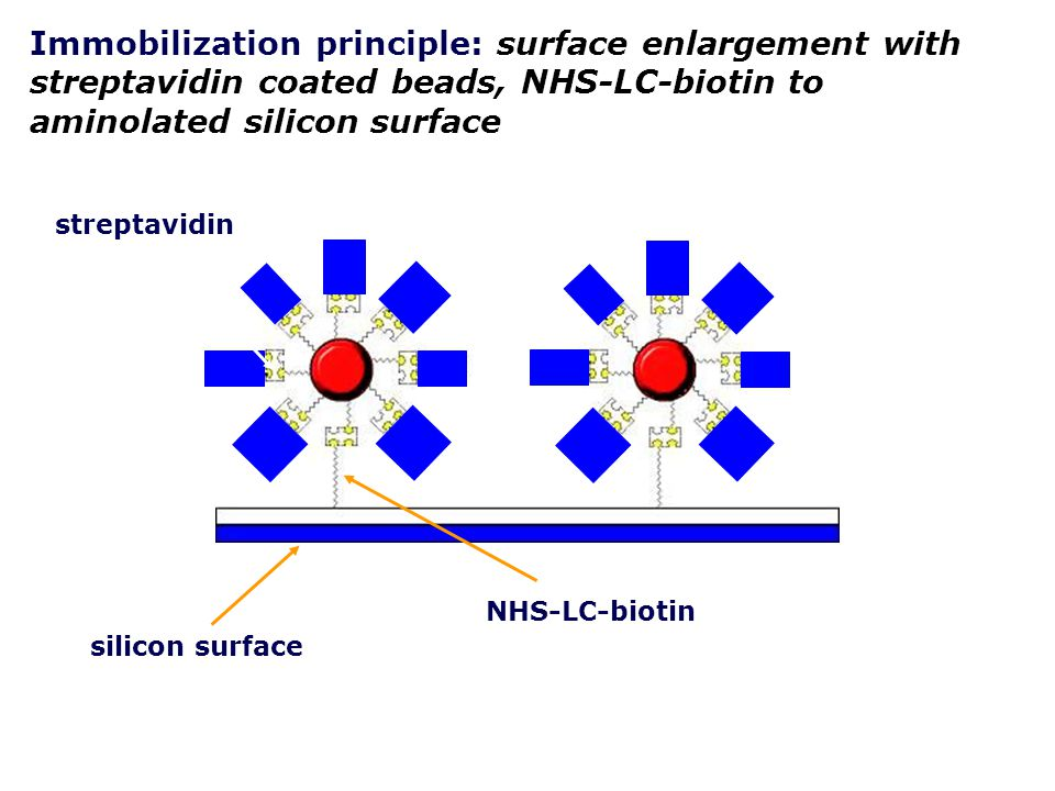 Immobilization principle: surface enlargement with streptavidin coated beads, NHS-LC-biotin to aminolated silicon surface biotinylated single DNA strands silicon surface NHS-LC-biotin streptavidin