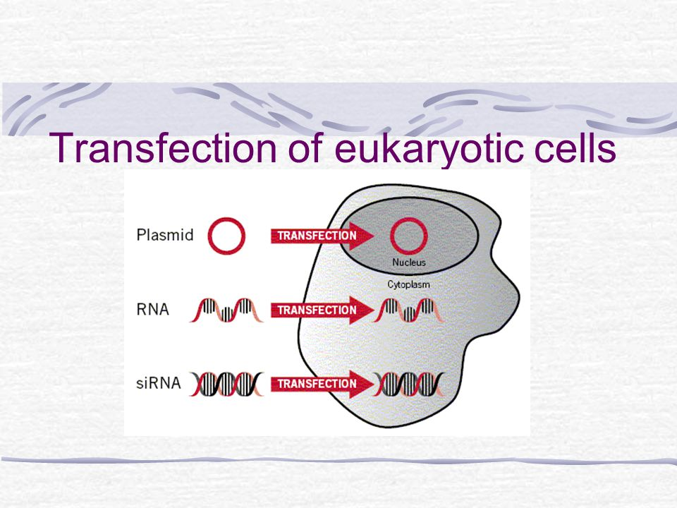 Transfection What is Transfection.