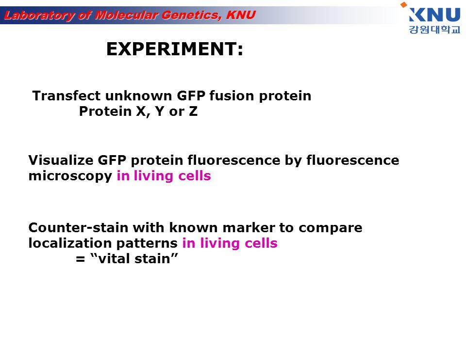 Laboratory of Molecular Genetics, KNU Some Cellular Organelles