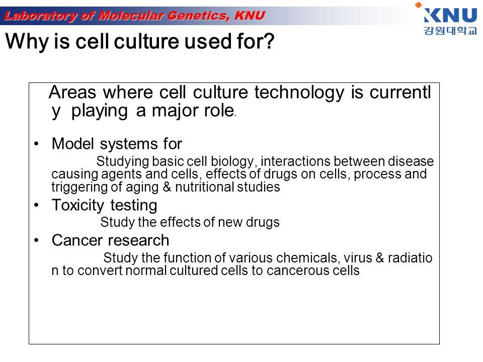 Laboratory of Molecular Genetics, KNU Contd….