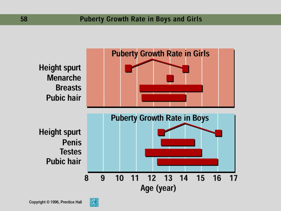 13 Sexual Maturation The changes in sexual maturation that occur for males and females during early adulthood.