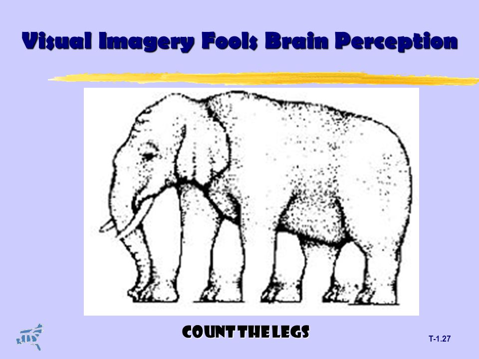 T-1.27 Visual Imagery Fools Brain Perception COUNT THE LEGS
