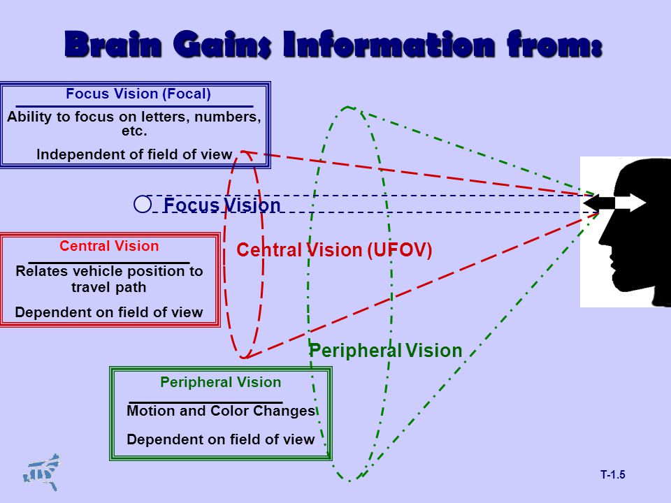 T-1.5 Brain Gains Information from: Focus Vision Central Vision (UFOV) Peripheral Vision Focus Vision (Focal) Ability to focus on letters, numbers, etc.