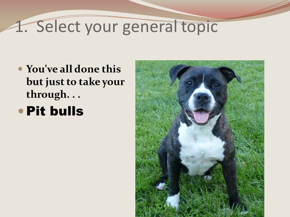 List Key Words Synonyms and Related Terms Terrier American Pit Bull Combat Dogs Attack dogs Training dogs Family dogs Dog fighting Larger categories Attacks of dogs Lawsuits pit bulls Legislation dangerous animals Breeding dogs for protection Smaller Categories Pit bull Working dogs Short hair dogs Pit bulls as pets