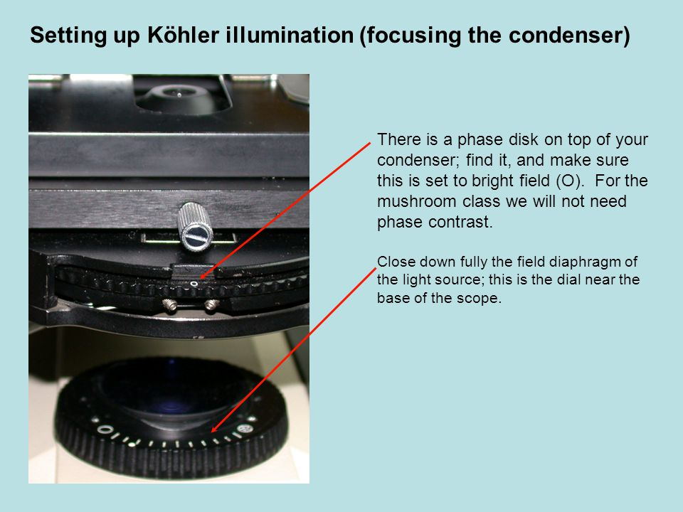 Setting up Köhler illumination (focusing the condenser) Open the iris diaphragm on the substage condenser (a small bent bar in the center of the condenser)