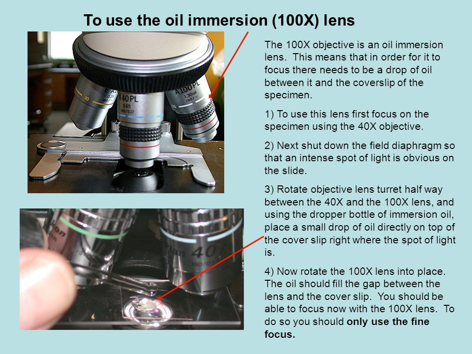 WARNING - once you have put oil on the slide you can not move back to the 40X lens.