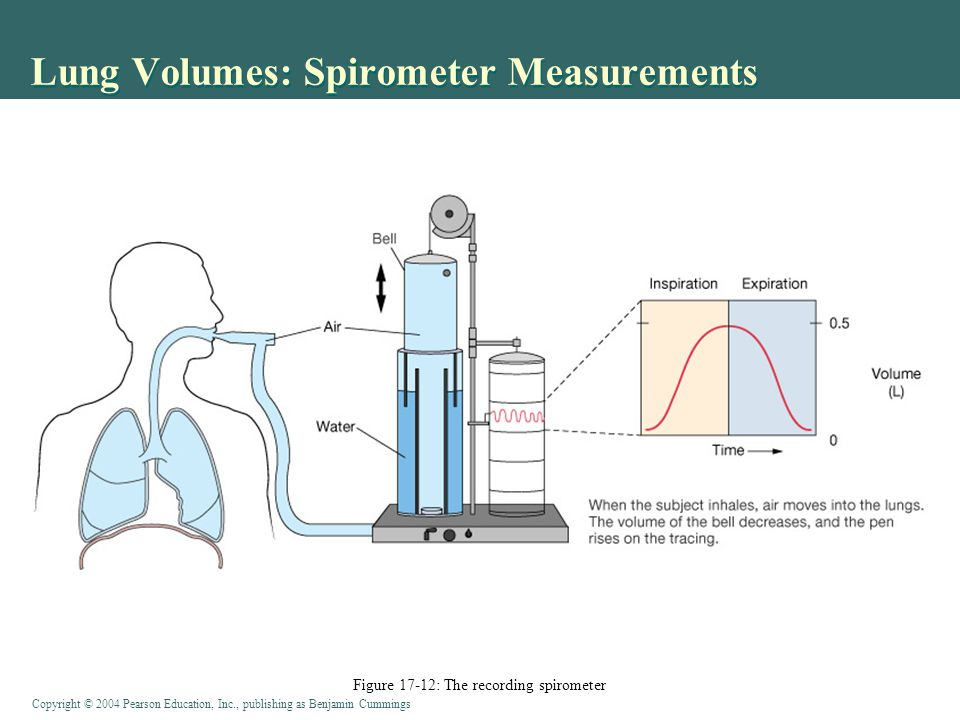 Copyright © 2004 Pearson Education, Inc., publishing as Benjamin Cummings Lung Volumes: Spirometer Measurements Figure 17-14: Total pulmonary and alveolar ventilation