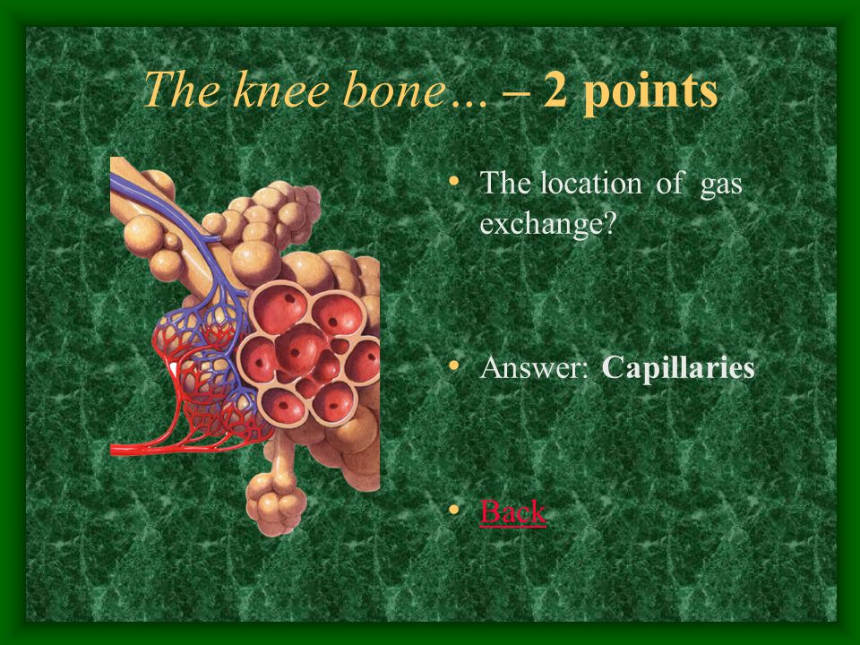 The knee bone… – 3 points The muscle that separates the thorax and the abdominal cavities ….