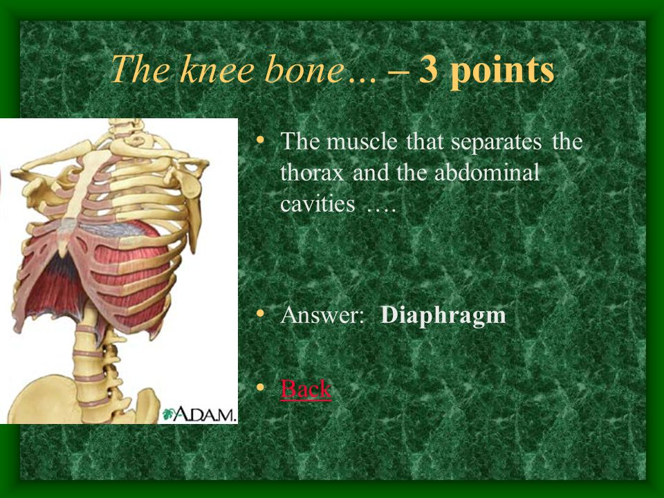 The knee bone… – 4 points Found in the cortex of the kidney, it is the site of filtration… Answer: Glomerulus Back