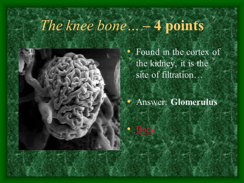 The knee bone… – 5 points The vein that carries oxygenated blood… Answer: Pulmonary vein Back