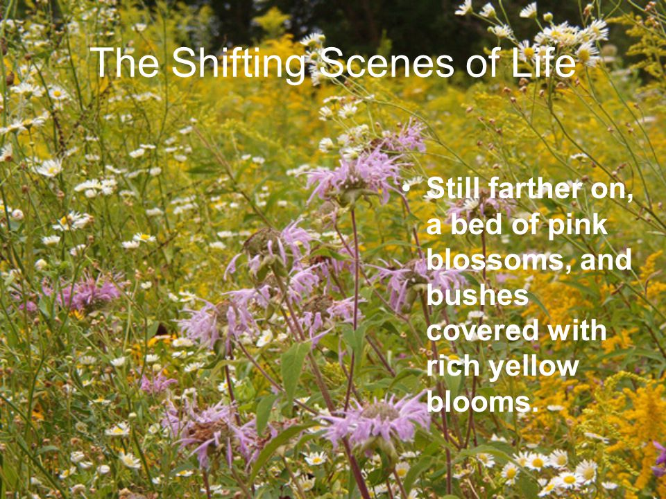 It's spring everywhere — the birds are singing and building a new nest. The Shifting Scenes of Life