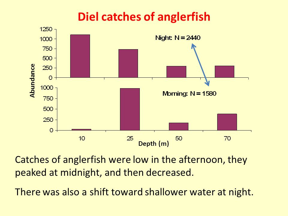 Catches of anglerfish were low in the afternoon, they peaked at midnight, and then decreased.