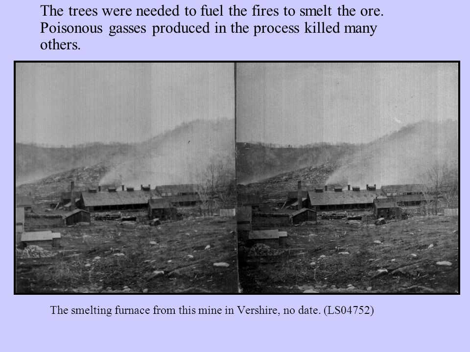 Vermont's forests continued to shrink once people found ways to move its trees to other places.