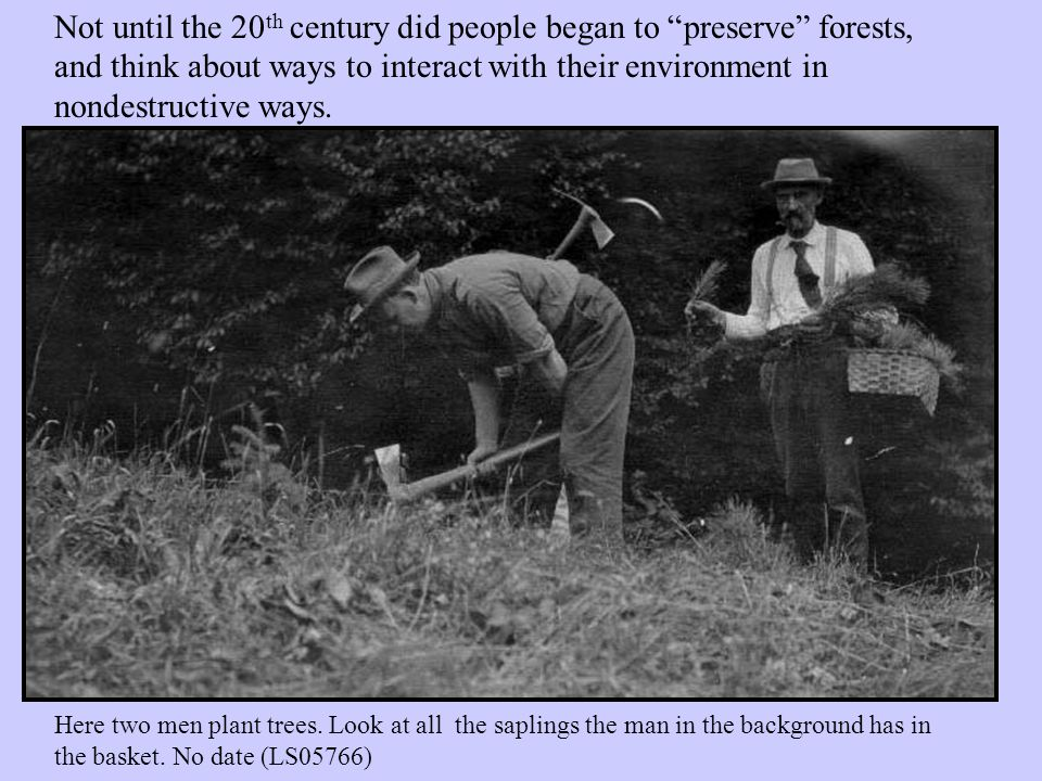 With ample time and care, forests have returned to Vermont.