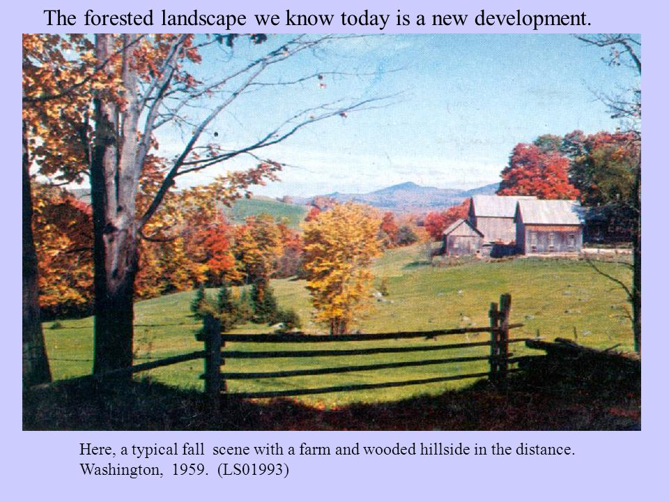 One hundred years ago, the state was a different place, with over 70% of the land cleared.