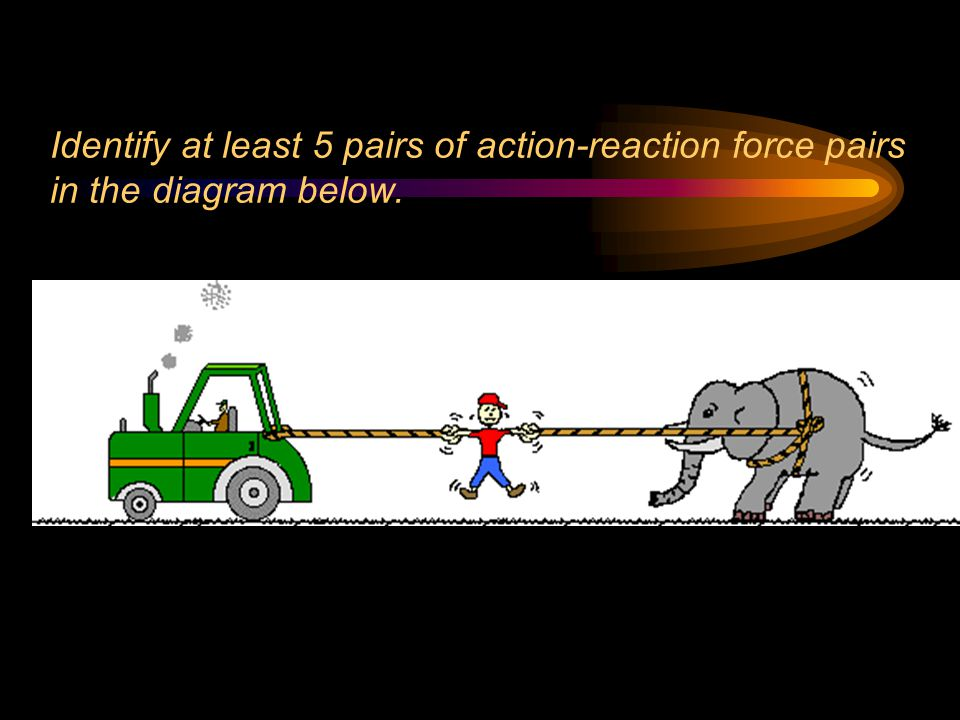 The elephant s feet push backward on the ground; the ground pushes forward on its feet.