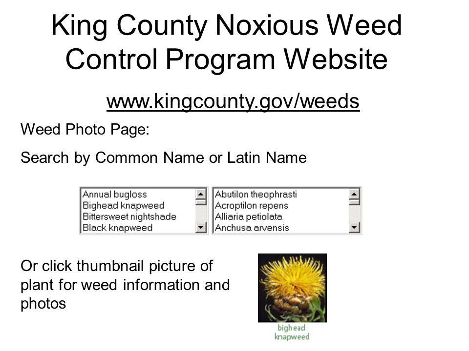 Sasha Shaw and Katie Messick King County Noxious Weed Program 201 South Jackson St, Suite 600 Seattle, WA 98104 206-296-0290 (program line) www.kingcounty.gov/weeds