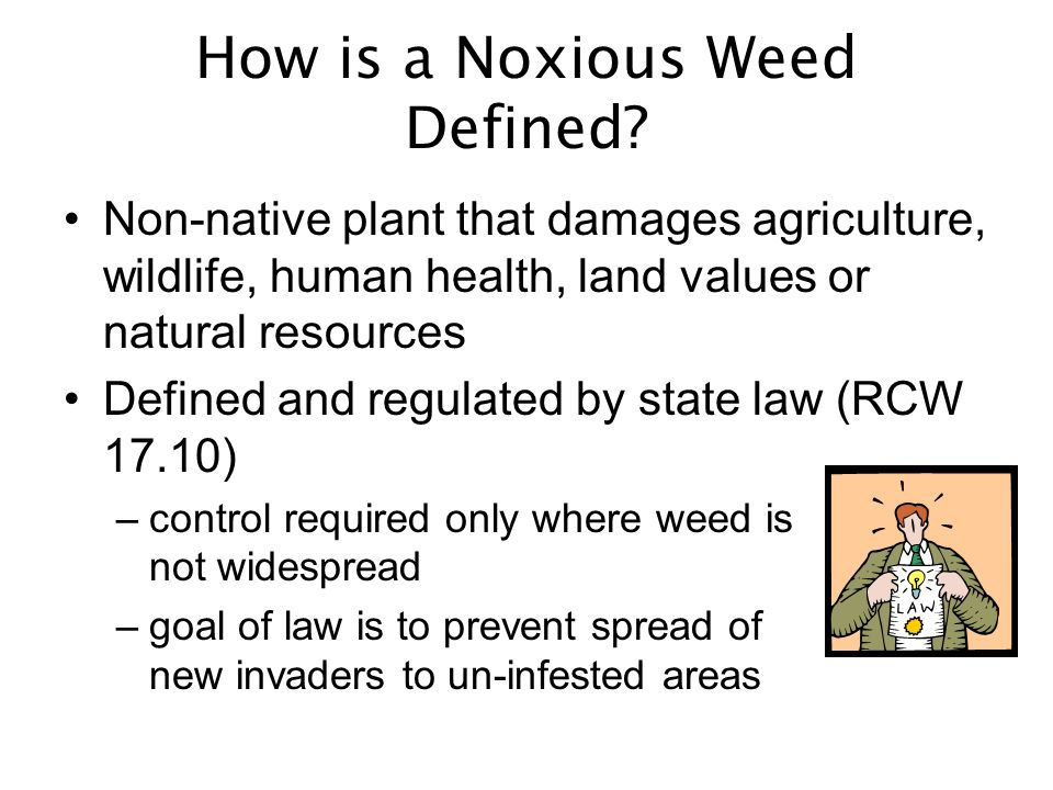 Noxious Weed List (WAC 16-750) –Highest priority is where weeds are beginning to invade –List set primarily by state weed board; law enforced by county noxious weed boards –Requires property owners to prevent plants from seeding Prohibited Plants List (WAC 16-752) –Goal is to prevent spread of new introductions –List is determined by WSDA, enforced by state Nursery Inspection Program –Prohibits sale and purchase of plants and seeds Two Lists: Growing vs.
