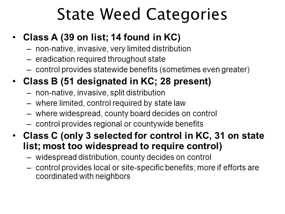Four Most Common Regulated Noxious Weeds in King County Tansy RagwortPurple Loosestrife Garden Loosestrife Giant Hogweed