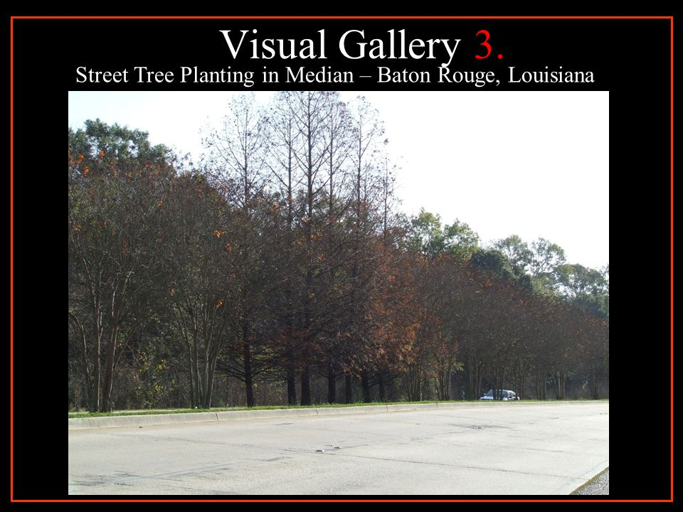 Visual Gallery 4. Street Tree Planting in Mixed Use Development Baton Rouge, Louisiana