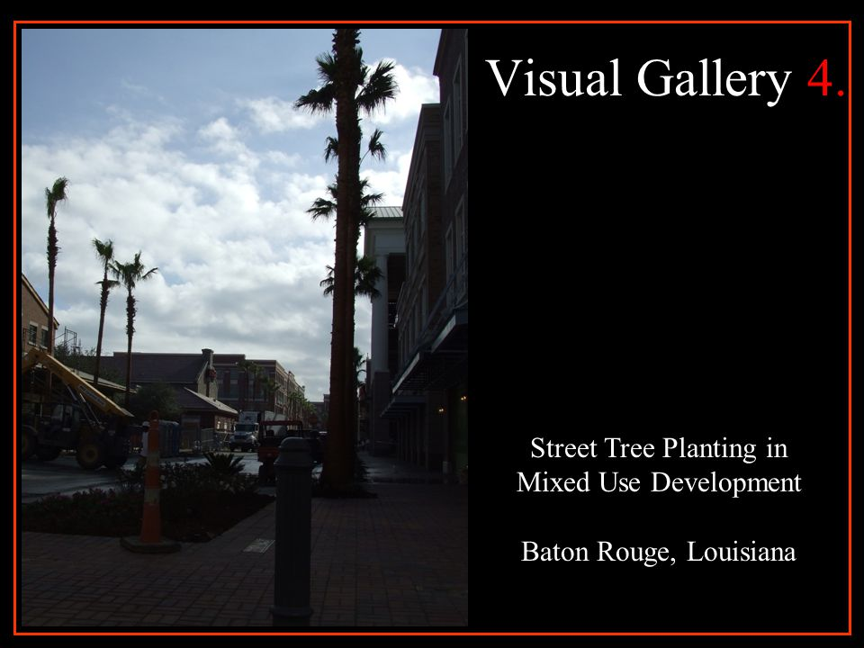 Visual Gallery 5. Street Tree Planting in Mixed Use Development Baton Rouge, Louisiana